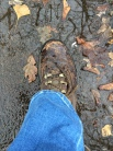 Boot (4)