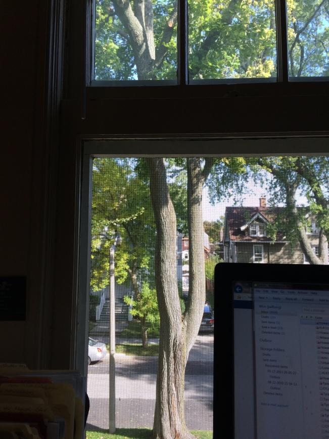 Tree from window