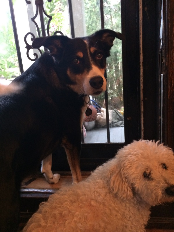 dogs-at-the-door