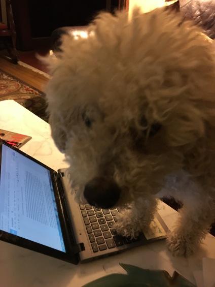 bowwow-typing